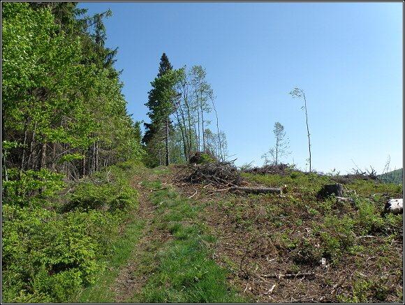 Oravské Beskydy. Les na polské /vlevo/ a slovenské straně hranice