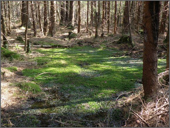 Slavkovský les. Malé rašeliniště