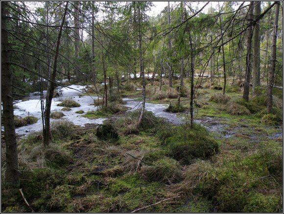 Slavkovský les. Rašeliniště Paterák