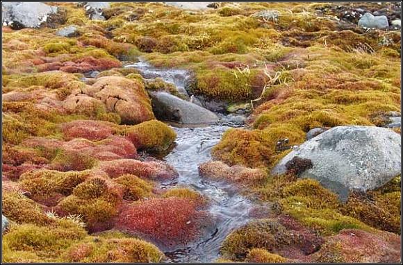 Země Františka Josefa. V krátkém arktickém létě je tu nespočet potůčků a řek