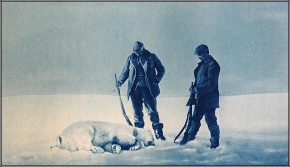 Ten byl také významný tím, že Strindberg zastřelil prvního medvěda