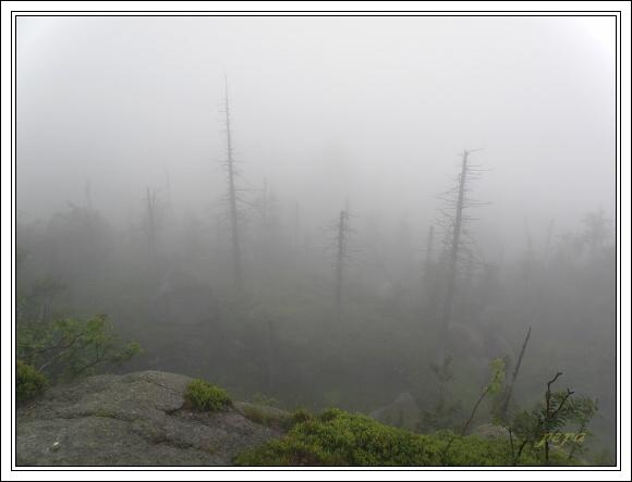 Jizerské hory. Mlha na Poledních kamenech