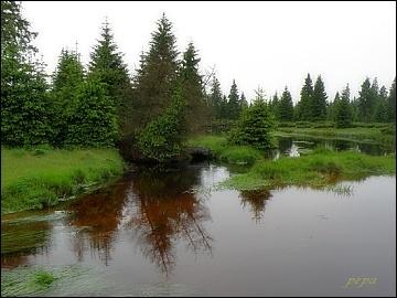 Jizerskohorská rašeliniště