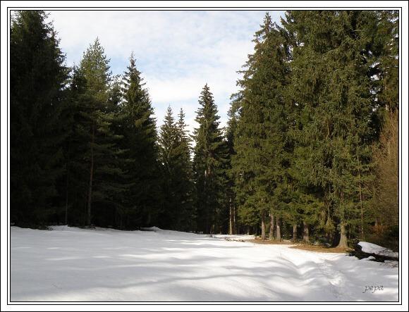 Chebsko. Hluboké zdravé lesy jsou velkou devízou tohoto kraje