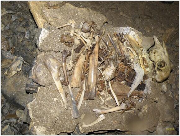Malá Stanišovská jaskyňa se stala pohřebištěm mnoha zbloudilých živočichů...
