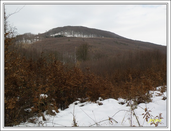Chřiby. Holý kopec
