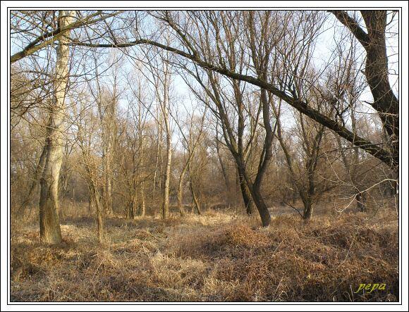 CHKO Dunajské luhy. Lužní les u Medveďova