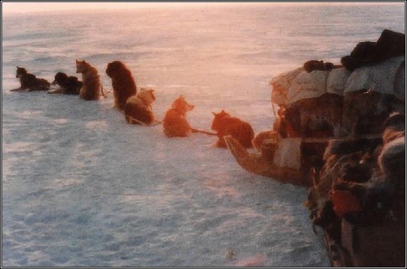 Psí spřežení - cesta s Milli na Liverpool Bay
