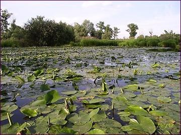 Chráněná krajinná oblast Poodří