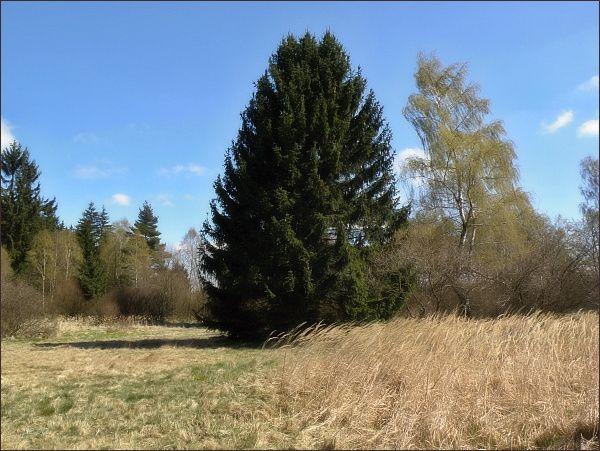 Přírodní rezervace Pavlovské mokřady