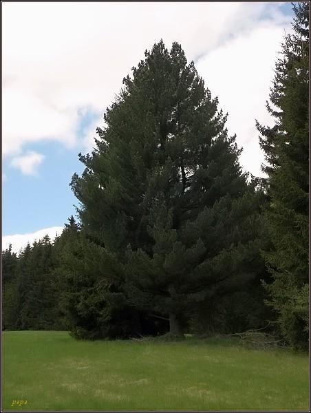 Místo, kde stávala obec Slatina. Nádherný exemplář borovice limby