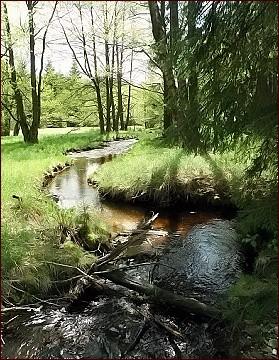 Údolí Hamerského potoka