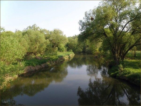 Morava u Nových Mlýnů