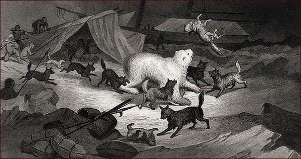 Napadení ledním medvědem (E. K. Kane)