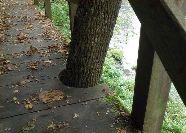 Sympatické je, že dřevěné chodníky zohledňují všechny překážky, především rostoucí stromy