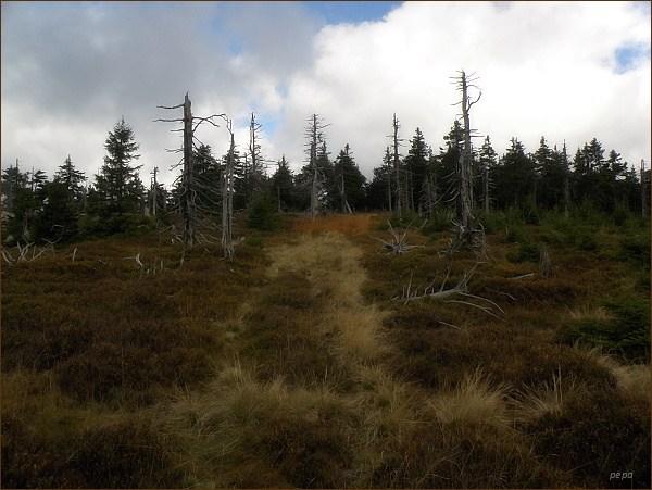 Cesta prochází pásmem horského lesa