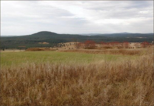 Pohled k Božídarskému rašeliništi a na Božídarský Špičák