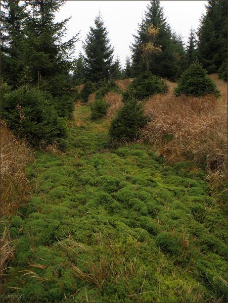 Podmáčená cesta v horském lese