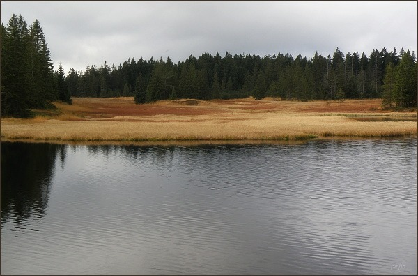 Rolavský rybník