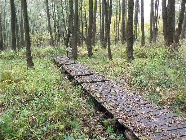 Upravená cesta k Jezevčímu prameni