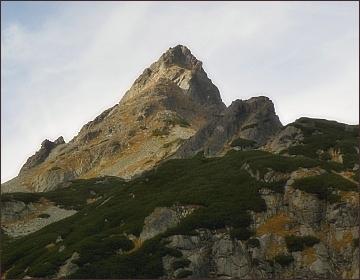 Volovec mengusovský
