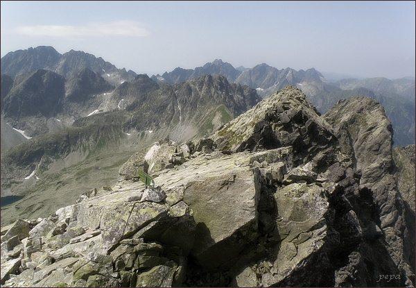 Pohled z Javorového štítu k západu. Uprostřed Svišťový štít, vlevo Gerlachovský štít a Zadný Gerlach