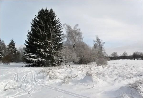 Okraj Přírodní rezervace Pavlovské mokřady