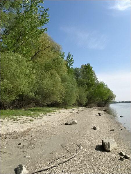 Jižní okraj Veľkolélského ostrova, přirozený břeh Dunaje