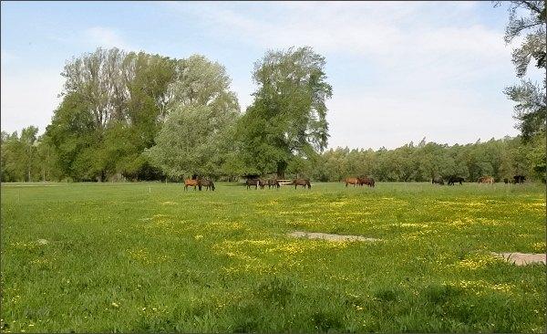 Koně na Veľkolélském ostrově