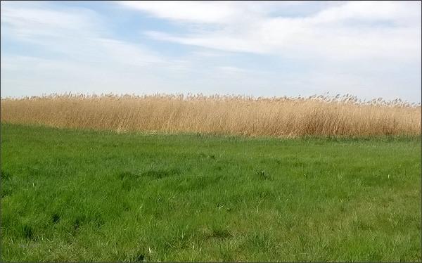 Prírodná rezervácia Dunajské trstiny