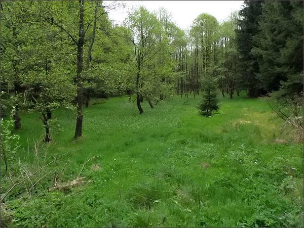 Krajina v Přírodním parku Halštrov