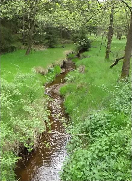 Bílý Halštrov v Přírodním parku Halštrov (asi 3 km pod pramenem)