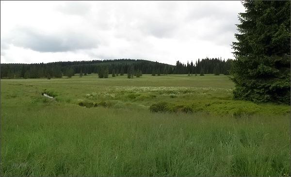 Přírodní památka Přebuzské vřesoviště