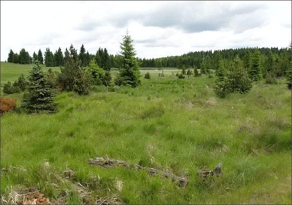 Přírodní rezervace Prameniště Chomutovky