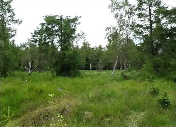 Národní přírodní rezervace Novodomské rašeliniště