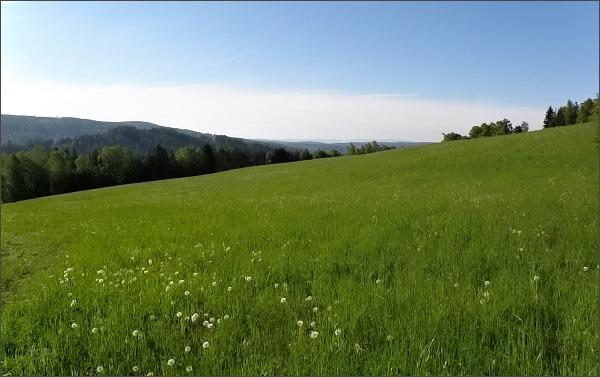 Nad Zelenou Horou. Pohled ke Slavkovskému lesu (na horizontu)