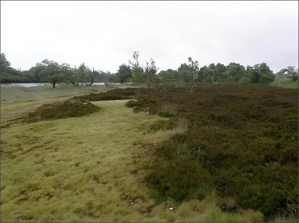 Přírodní park Východní Krušné hory. Dlouhý rybník s vřesovištěm