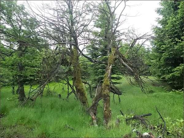 Přírodní park Východní Krušné hory.  Mokřady u Cínovce
