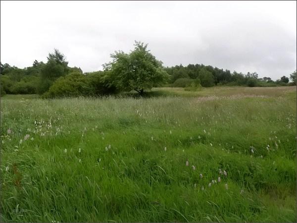 Přírodní rezervace Černá louka