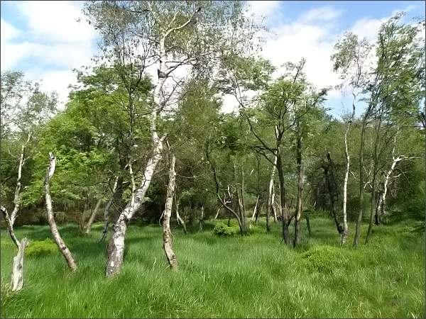 Les na Děčínském Sněžníku