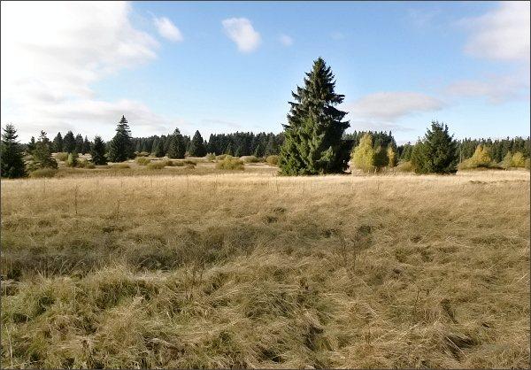 Národní přírodní památka Upolínová louka pod Křížky