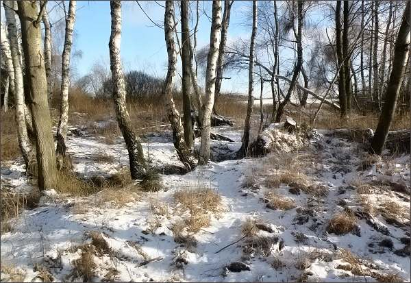 Pavlovské mokřady