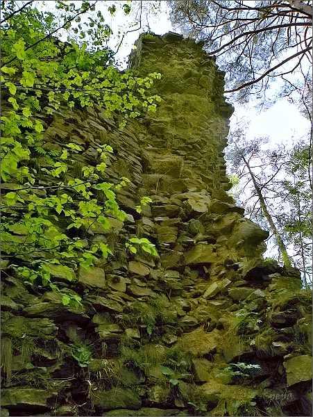 Zřícenina hradu Holoubek