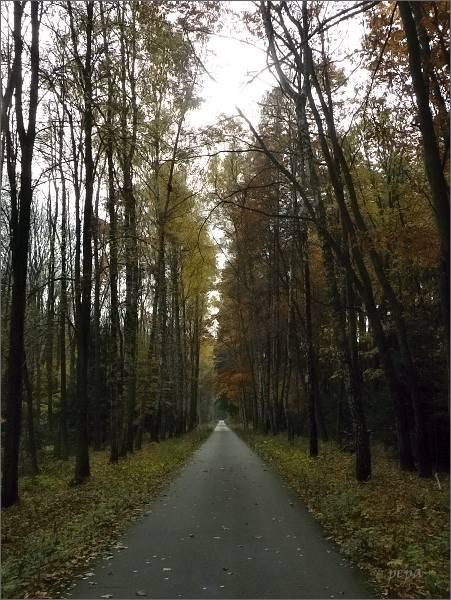 """Březová alej mezi Melkovem a Pilkou. <br>V roce 2015 byla nominována do fotografické soutěžní ankety """"Alej roku"""""""