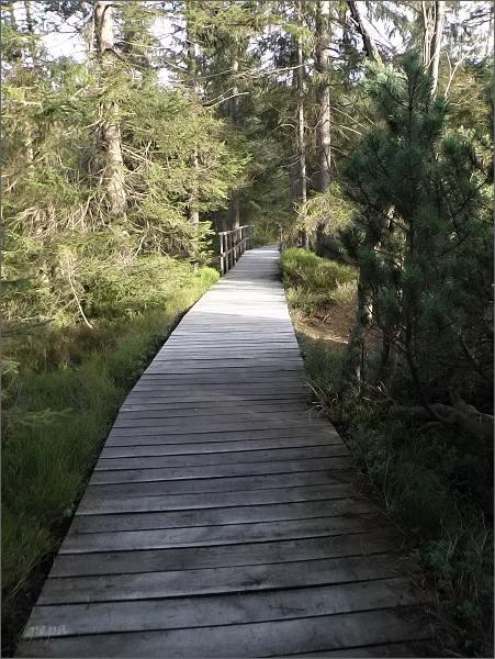 Povalkový chodník v rezervaci Kleiner Kranichsee