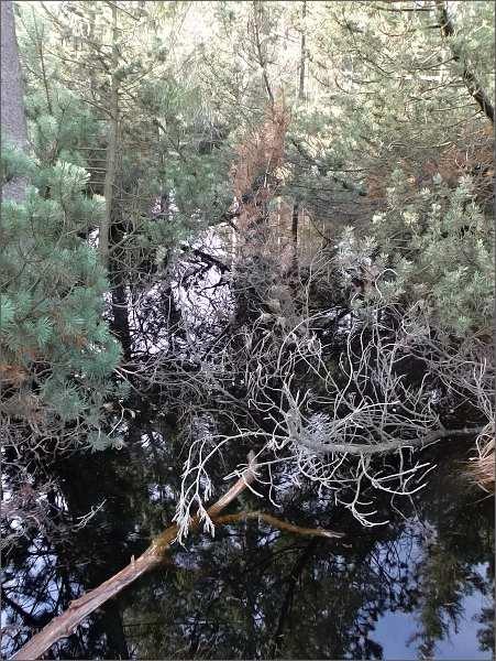 Rašelinoště Kleiner Kranichsee