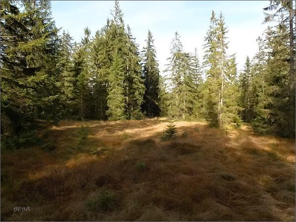 Rašeliniště Kleiner Kranichsee
