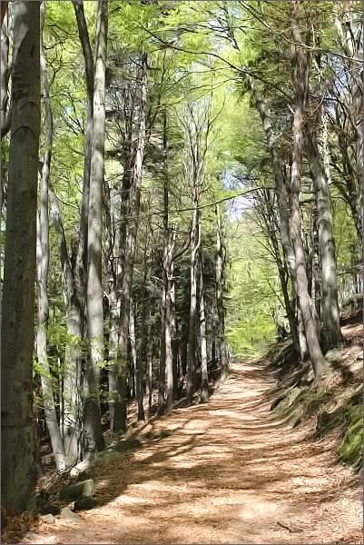 Hostýnské vrchy. Bukové lesy pod Skalným