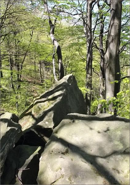 Přírodní rezervace Obřany