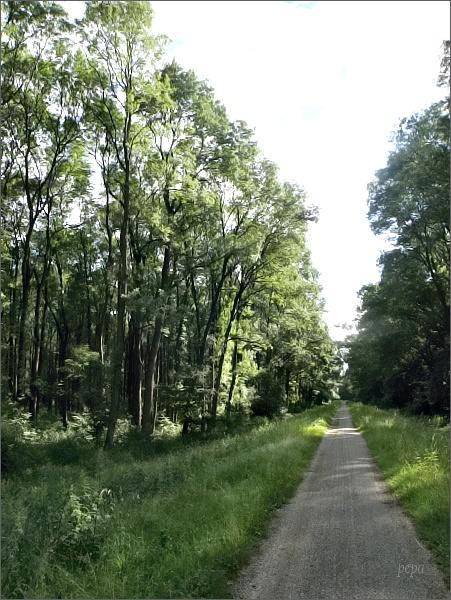 Na slovenské straně vede cyklostezka hlubokými lužními lesy